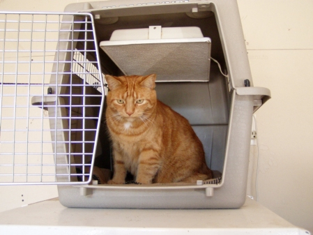 """Application-cat-box"""